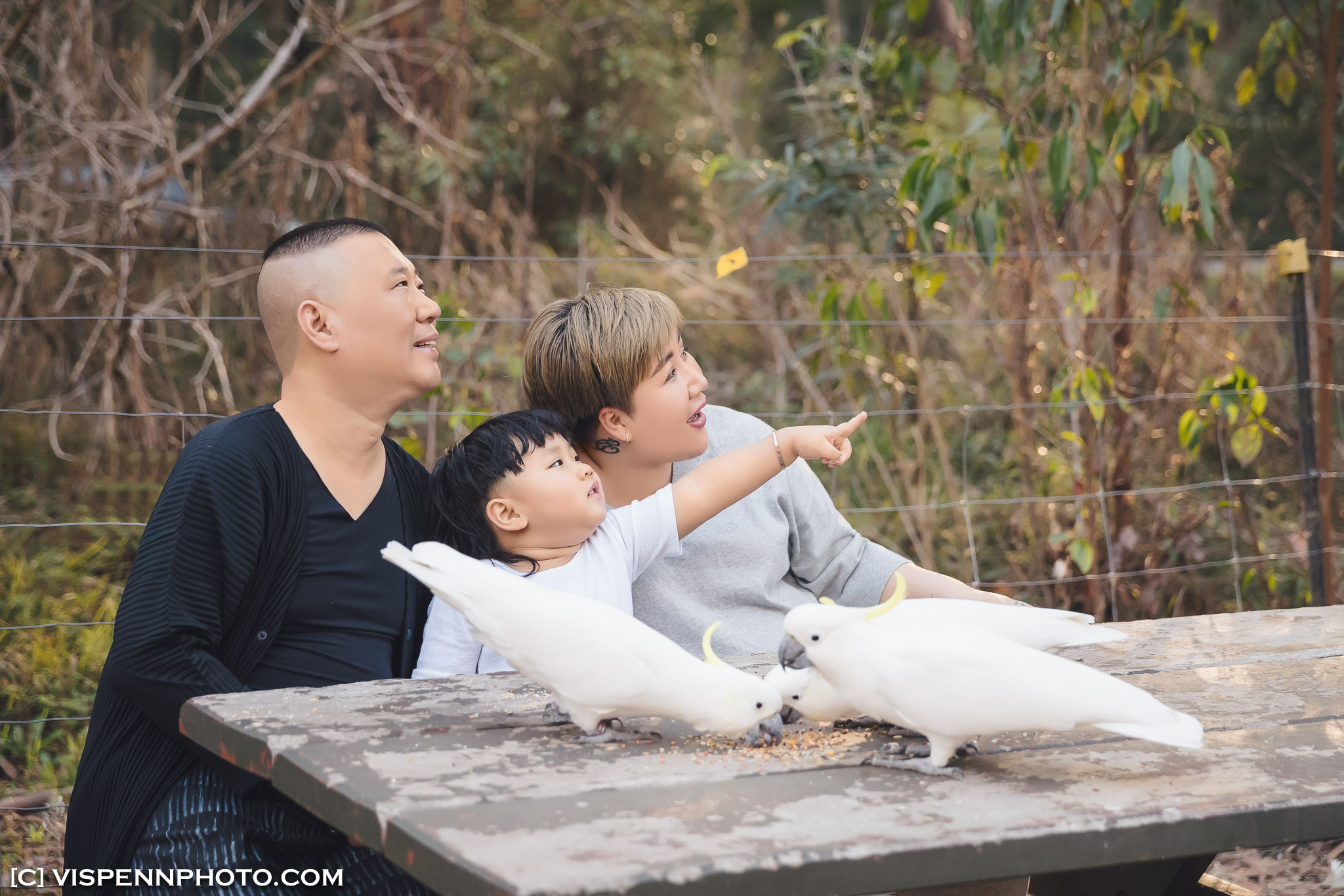 Melbourne Newborn Baby Family Photo BaoBao VISPENN 墨尔本 儿童 宝宝 百天照 满月照 孕妇照 全家福 KIDS VISPENN P 7577