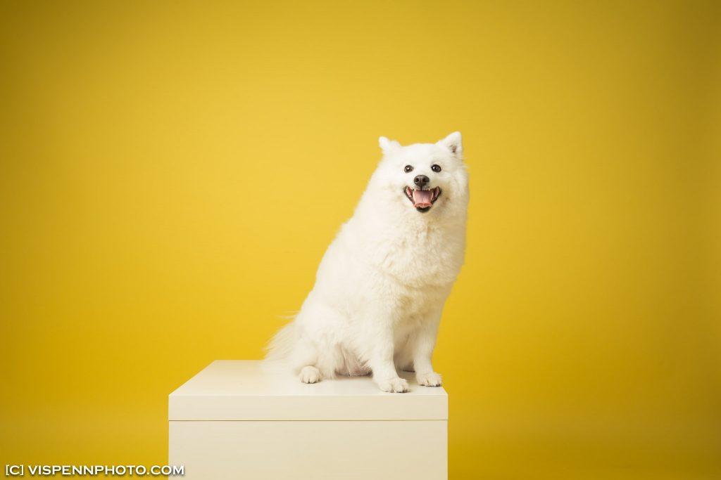 Melbourne Pets Animals Cats Dogs Photography VISPENN 墨尔本 宠物摄影 猫 狗 动物 萌宠摄影 5DB 1044