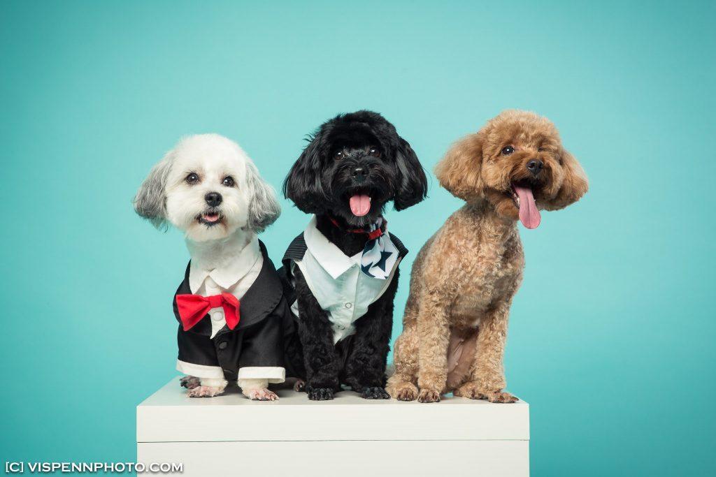 Melbourne Pets Animals Cats Dogs Photography VISPENN 墨尔本 宠物摄影 猫 狗 动物 萌宠摄影 PEN 9018