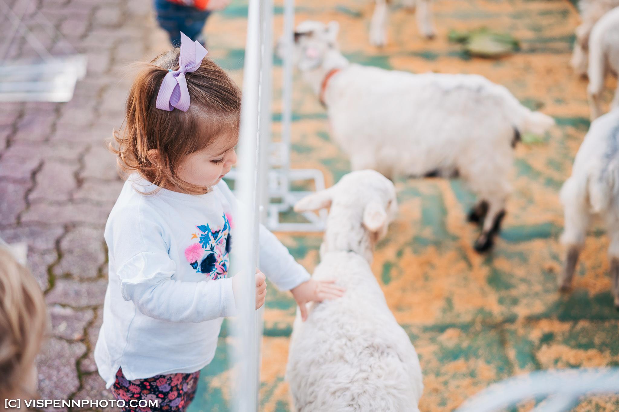 Melbourne Baby Family Birthday Party Photographer 墨尔本 百日宴 满月宴 周岁宴 摄影 VISPENN Biostime 0702 Sony VISPENN