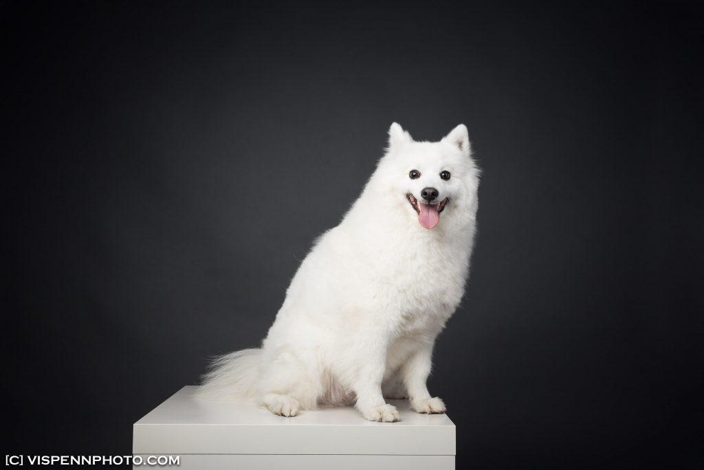 Melbourne Pets Animals Cats Dogs Photography VISPENN 墨尔本 宠物摄影 猫 狗 动物 萌宠摄影 5DB 1741